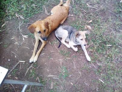 dogs rwanda